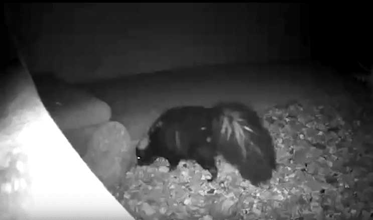 Watch groundhog's prediction on your security camera
